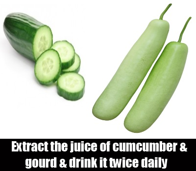 cucumber and gourd