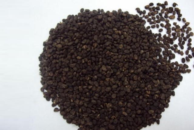 Psoralea Seeds