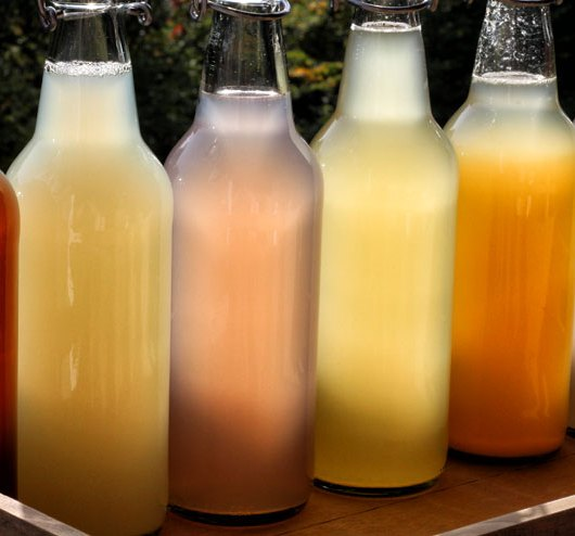 Wasserkefir selber machen - Wasserkefir in Flaschen