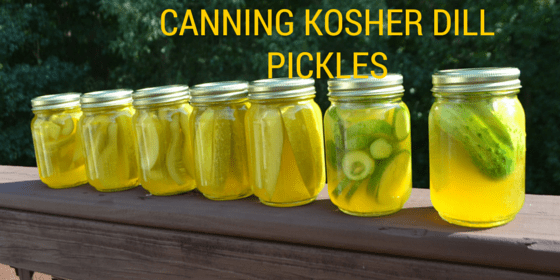 Our First Experience Canning Kosher Dill Pickles Harvested From Our Organic Garden