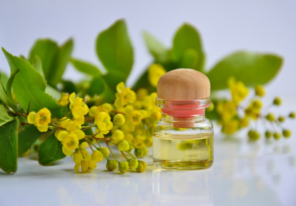 essential oil aromatherapy cosmetic oil spa medicine natural cosmetology beauty relaxation massage therapy barberry yellow flowers glass bottle product flower