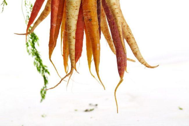 carrots-1149173_960_720-768x512