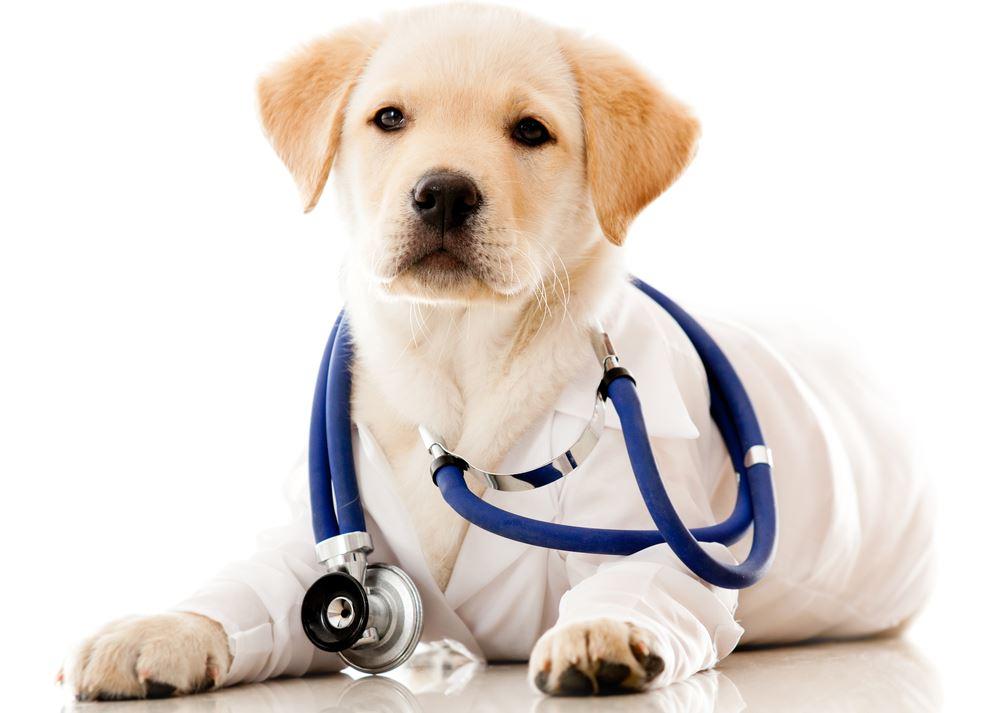 dog-vaccine