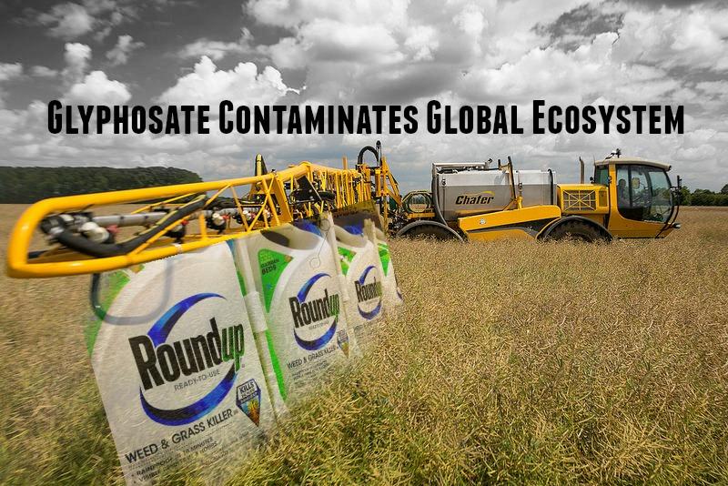 glyphosate-contaminates-global-ecosystem