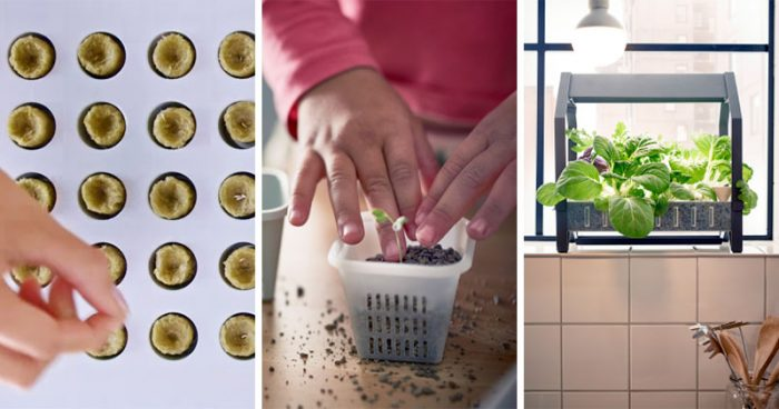 IKEA Releases Indoor Garden Kits For Year Round Veggies – No Skills or Soil Needed