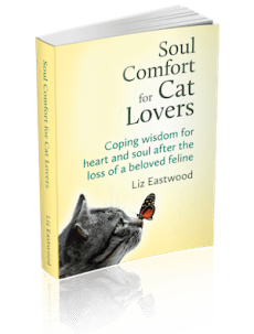 Need a natural remedy for eye conjunctivitis in cats? | Natural Cat