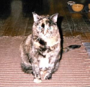 Pye - sweet little loud cat