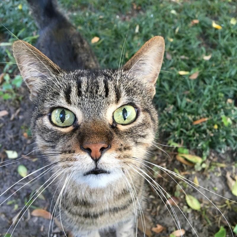 catfoodrecall