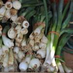 My Favorite Onions