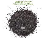 Natural Ether Website Images AFGHAN POPPY 2