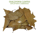 Natural Ether Website Images CHALIPONGA LEAVES 2