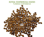 Natural Ether Website Images Rivea Corymbosa Seeds 2