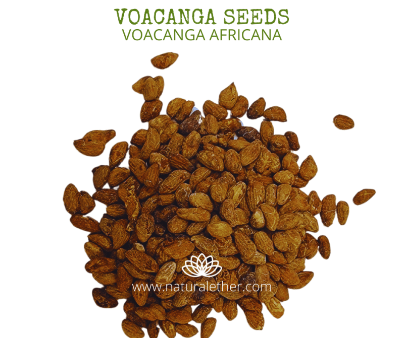 Natural Ether Website Images VOACANGA SEEDS 2