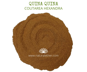 Natural Ether Website Images Quina Quina 2