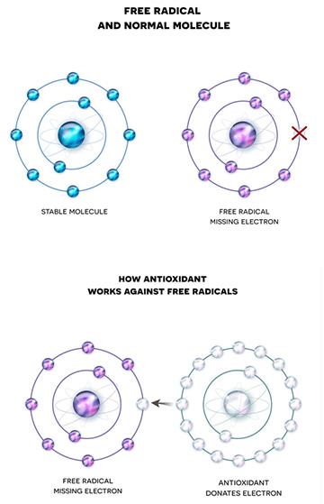 free radical explanation