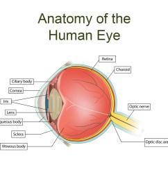 eye anatomy [ 1200 x 1200 Pixel ]