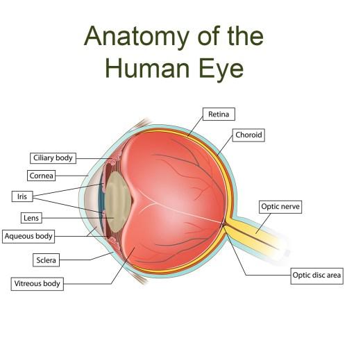 small resolution of eye anatomy