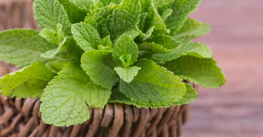 4a67df5e6287 13 Amazing Health Benefits of Mint Leaves - Natural Food Series