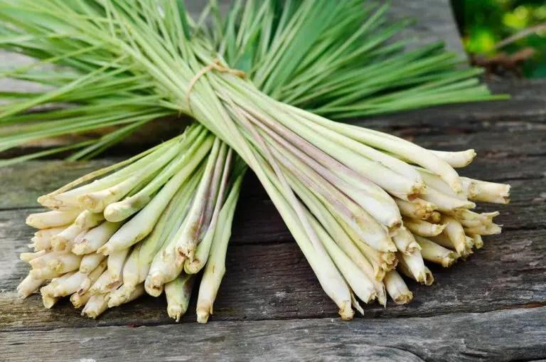 Benefícios à saúde surpreendentes doLemongrass