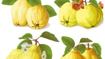 11 Surprising Health Benefits of Quince