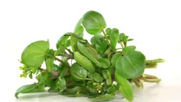 Watercress Benefits For Hair Archives Natural Food Series
