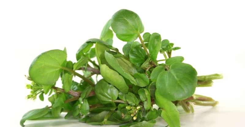 19 Impressive Health Benefits of Watercress