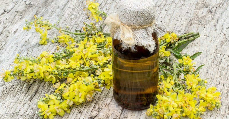 11 Amazing Health Benefits of Mullein Essential Oil
