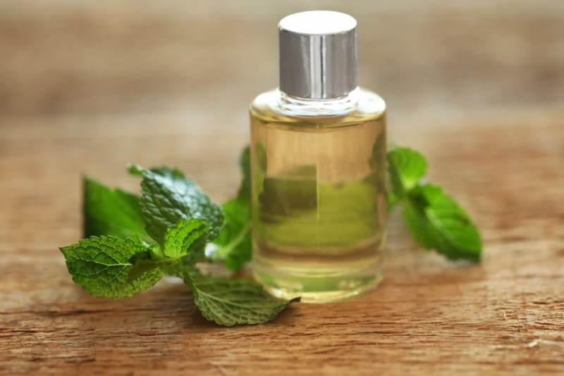 11 Amazing Benefits of Spearmint Essential Oil