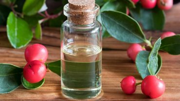 12 Impressive Benefits of Wintergreen Essential Oil