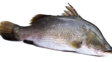 11 Amazing Health Benefits of Barramundi