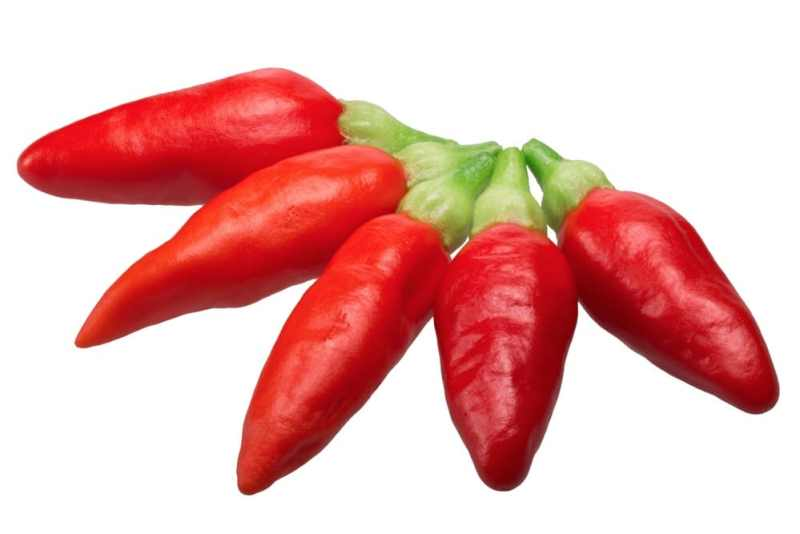 Tabasco pepper