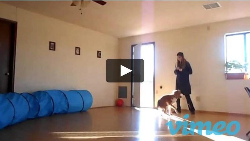 Adrienne Farricelli DOG Training