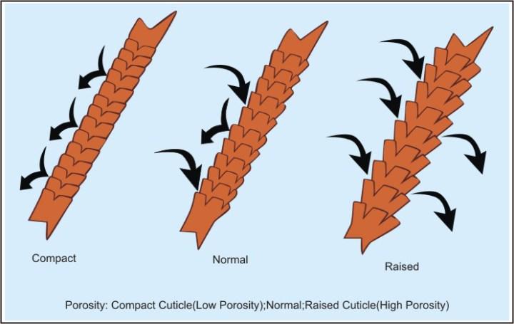 Tips for Moisturizing Dry Natural Hair (Low Porosity)