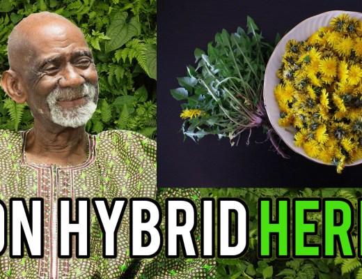 Herbs To Eat Dr Sebi
