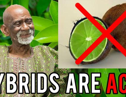 Hybrid Foods Dr Sebi