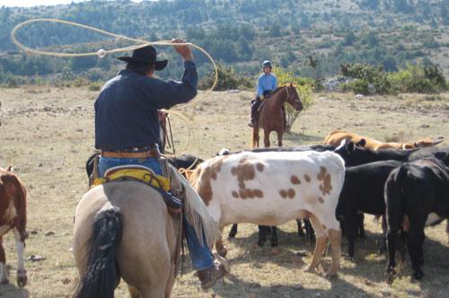 Resultado de imagen para lazando vacas