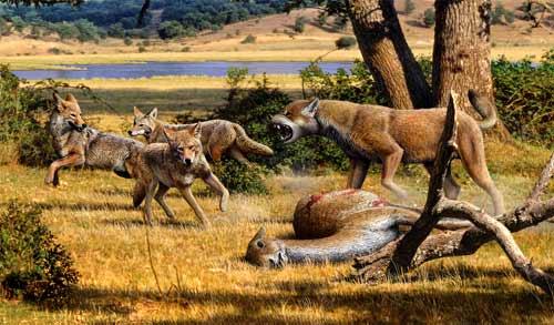 Image result for Canis lepophagus