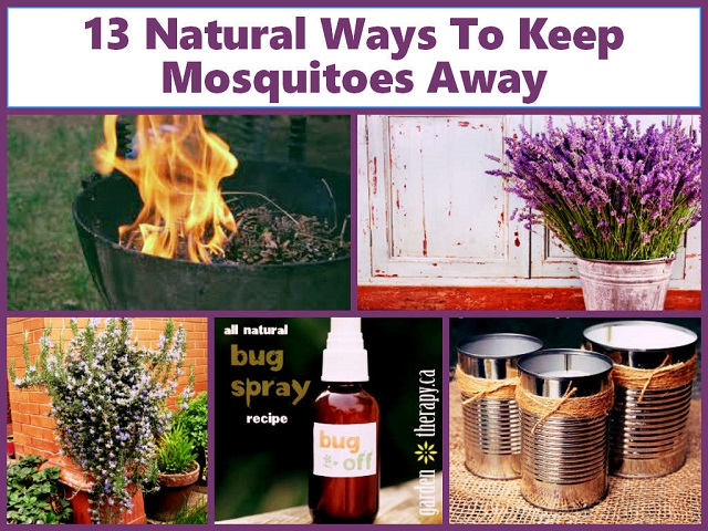 How To Keep Mosquitoes Out Of House