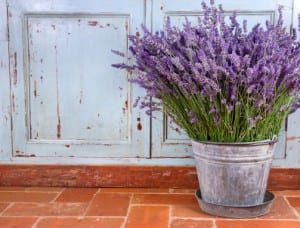 11 Plants That Repel Mosquitoes