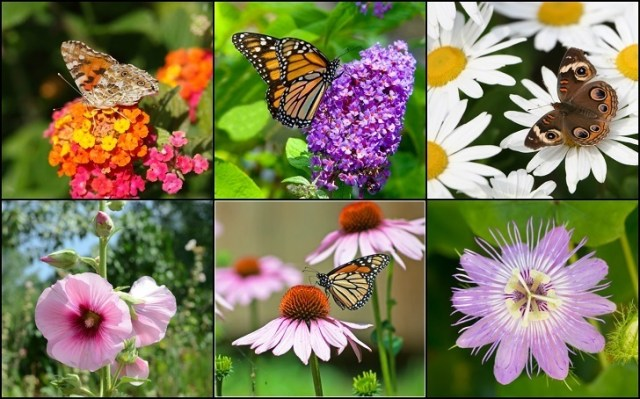 30 Beautiful Plants to Attract Butterflies to Your Garden