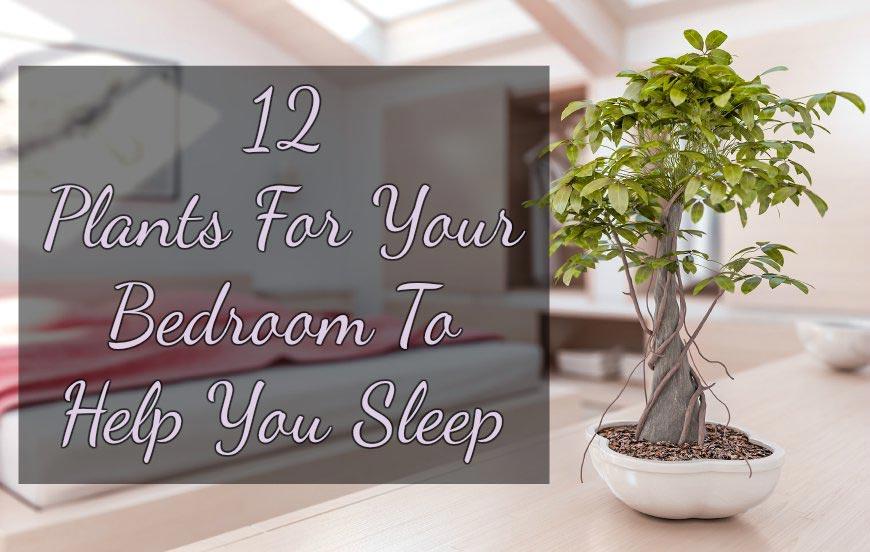 12 Plants For Your Bedroom to Help You Sleep