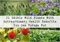 Wild Edible Plants Chart   www.pixshark.com - Images ...