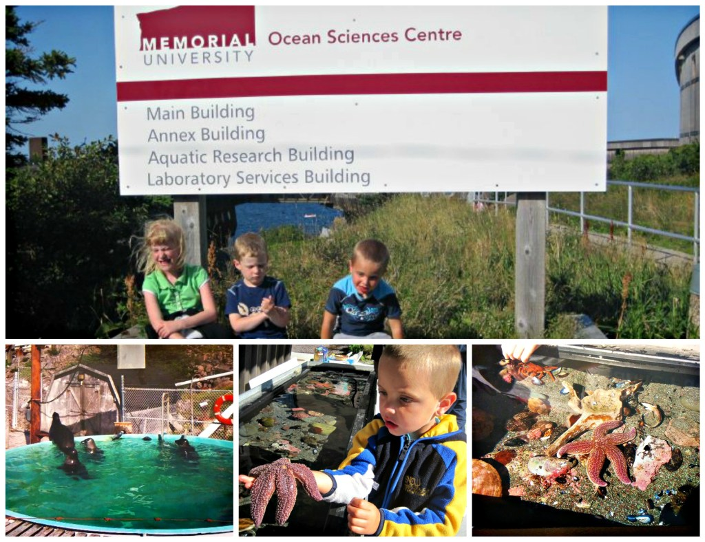 4 Free Places to visit while in Newfoundland Ocean Science Center