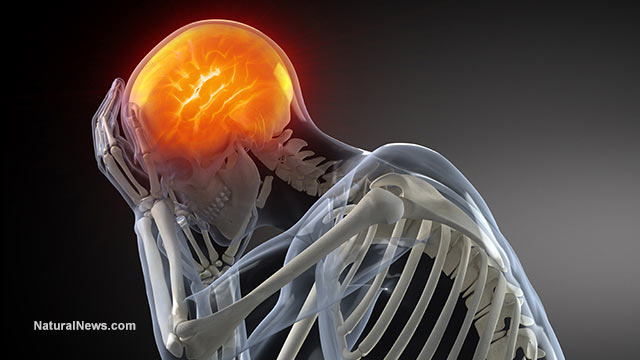 https://i0.wp.com/www.naturalnews.com/gallery/640/BodyParts/3d-Model-Human-Brain-Skeleton-Pain.jpg