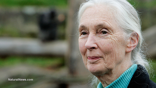World-famous scientist Jane Goodall condemns GMO food and fraudulent industry 'science' Editorial-Use-Jane-Goodall