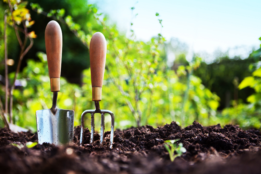 Image: Top 10 homemade natural herbicides to tackle the weeds in your garden