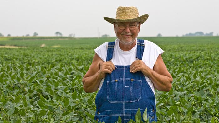 圖片:科學地顯示農場工作,以改善退伍軍人的精神健康...無需藥物