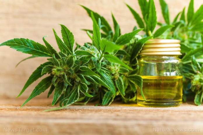 Image: What science is confirming about the benefits of CBD oil