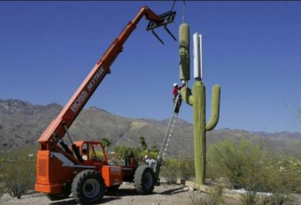 """Image: Attack of the 5G """"palm trees"""" and radiation-emitting fake cactus towers"""