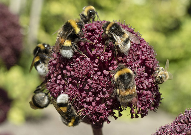 Image: Top EU court upholds French ban on bee-killing pesticides